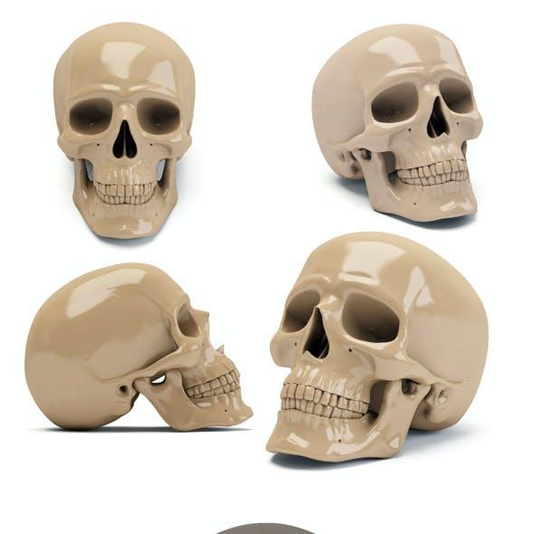Human scull 3d print model
