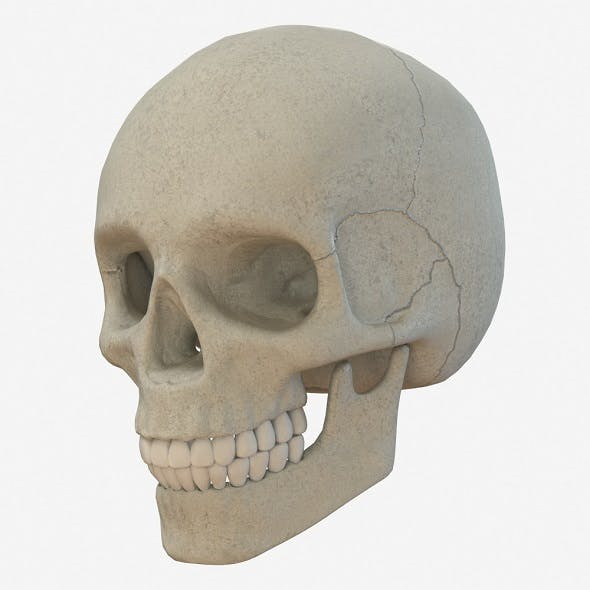 skull low poly and high poly pbr - 3DOcean Item for Sale