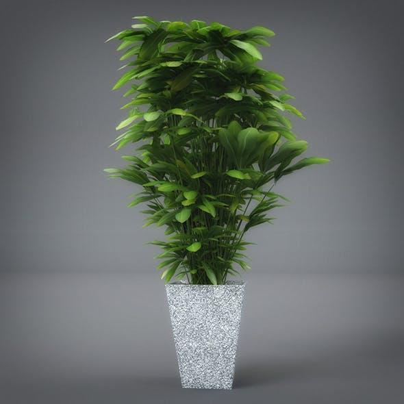 Interior Plant (3dsmax + Vray Ready)