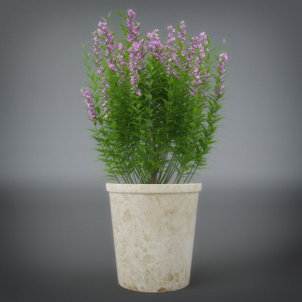 Interior Flower Plant - 3DOcean Item for Sale