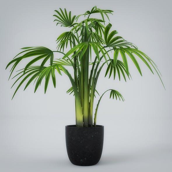 Interior Plant
