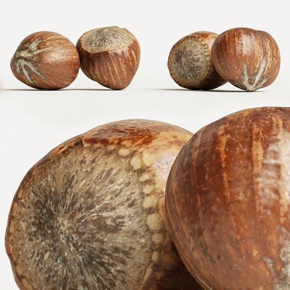 Hazelnut 002