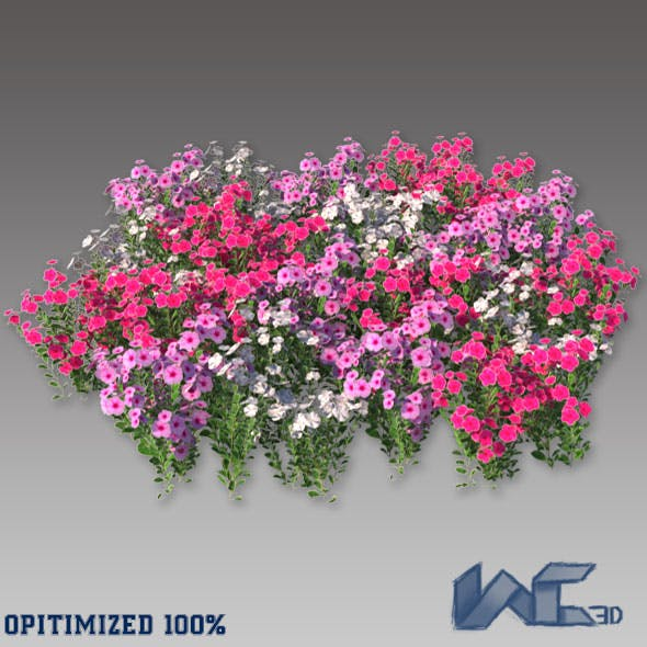 Catharanthus Roseus - 3DOcean Item for Sale