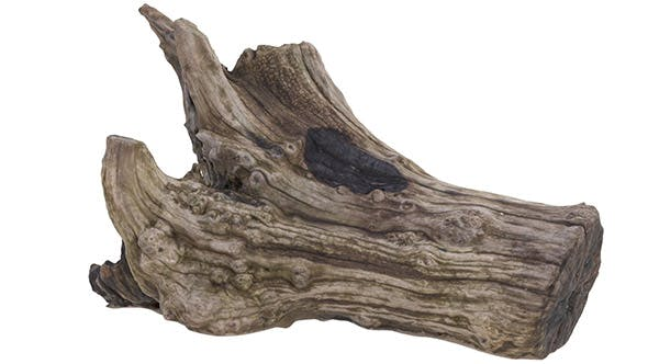 Petrified Wood Stump - High and Low Poly versions - 3DOcean Item for Sale