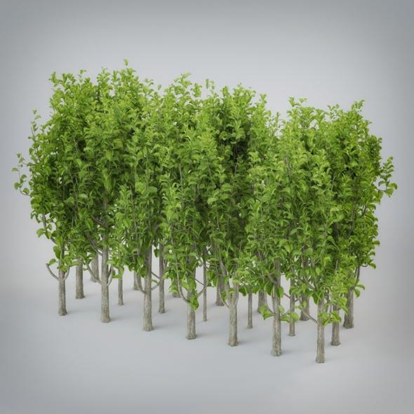 Small Plants Bush - 3DOcean Item for Sale