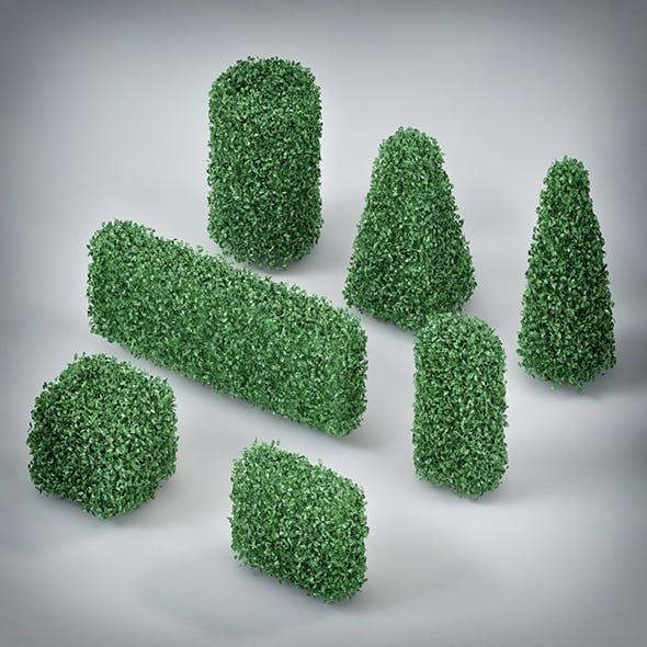 Plants Bush