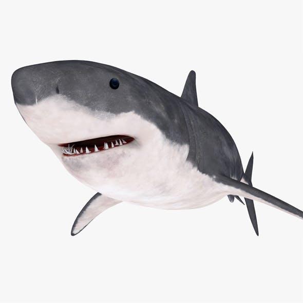 Great white shark - 3DOcean Item for Sale