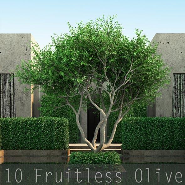 10 Fruitless Olive