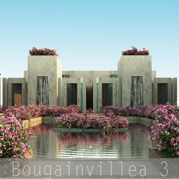 Bougainvillea 3 - 3DOcean Item for Sale