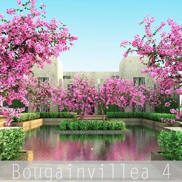 Bougainvillea 4 - 3DOcean Item for Sale