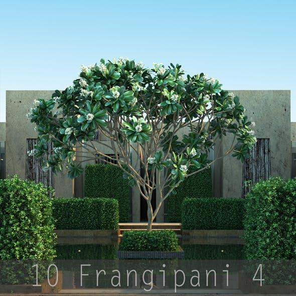 10 Frangipani 4