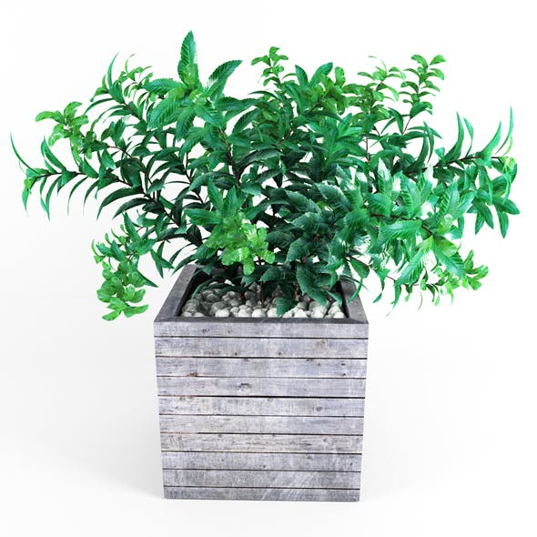 Plant tree 01