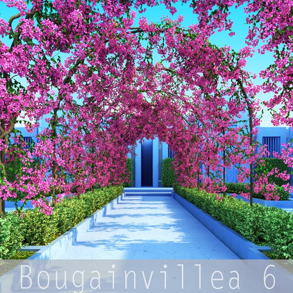 Bougainvillea 6 - 3DOcean Item for Sale