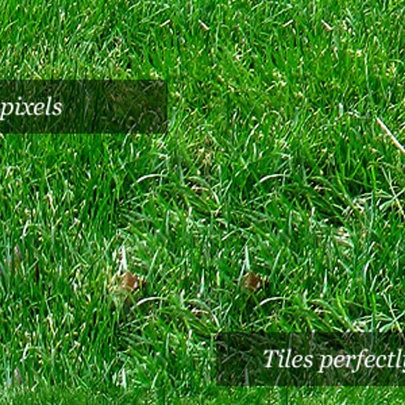 Grass Texture II