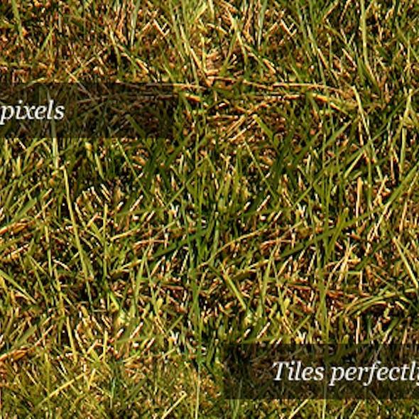 Grass Texture III