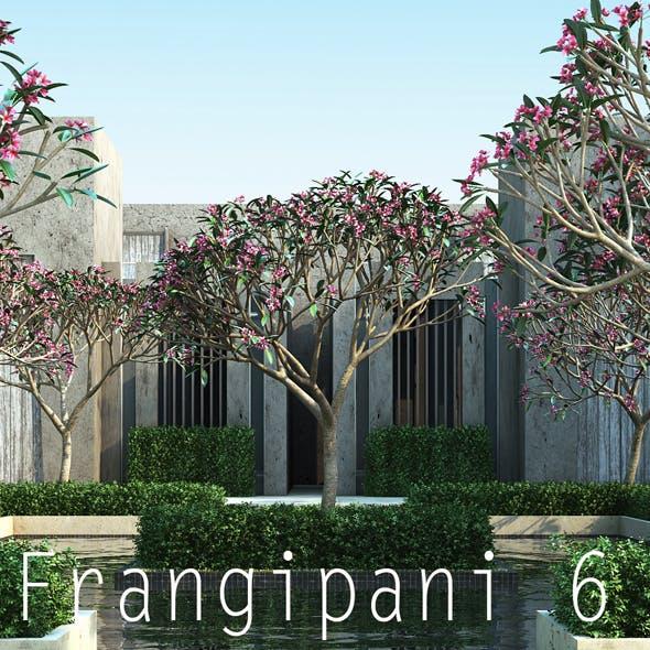 10 Frangipani 6 - 3DOcean Item for Sale