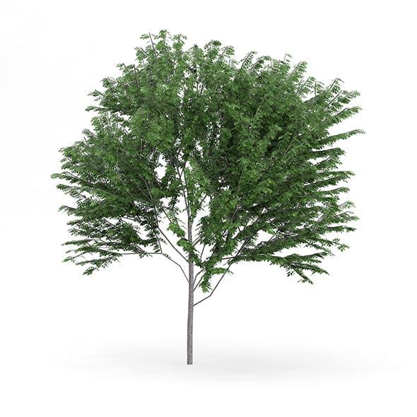 Common Ash (Fraxinus excelsior) 13.7m - 3DOcean Item for Sale