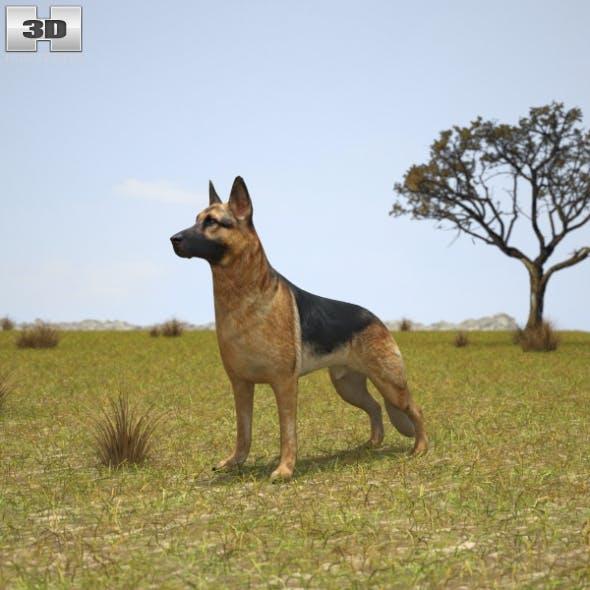 German Shepherd - 3DOcean Item for Sale