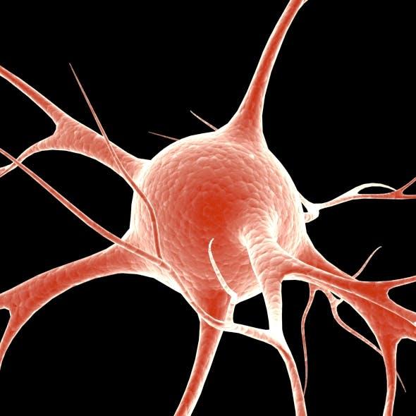 Neuron - 3DOcean Item for Sale