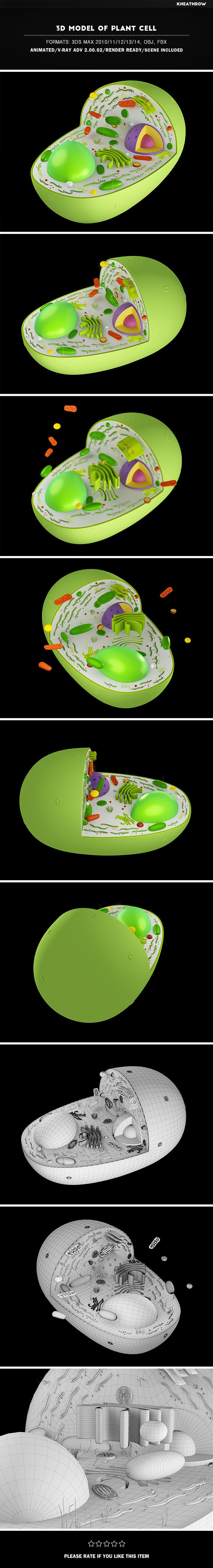 3D Model of Plant Cell - 3DOcean Item for Sale