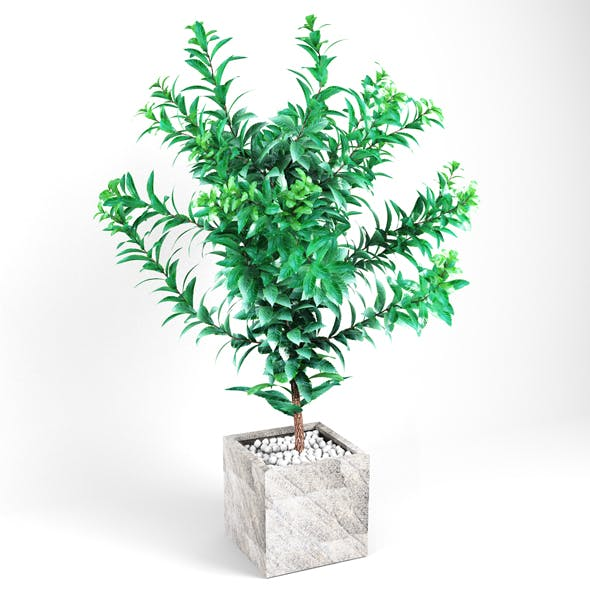 Plant tree 03
