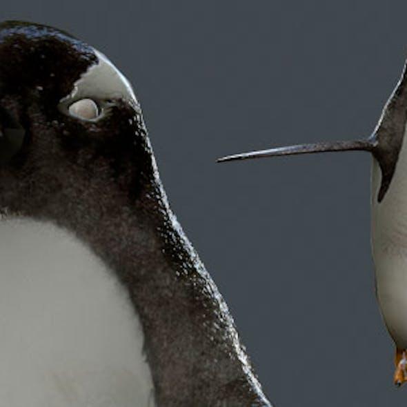 Gentoo Penguin - Mid-Poly 4,460 Polys