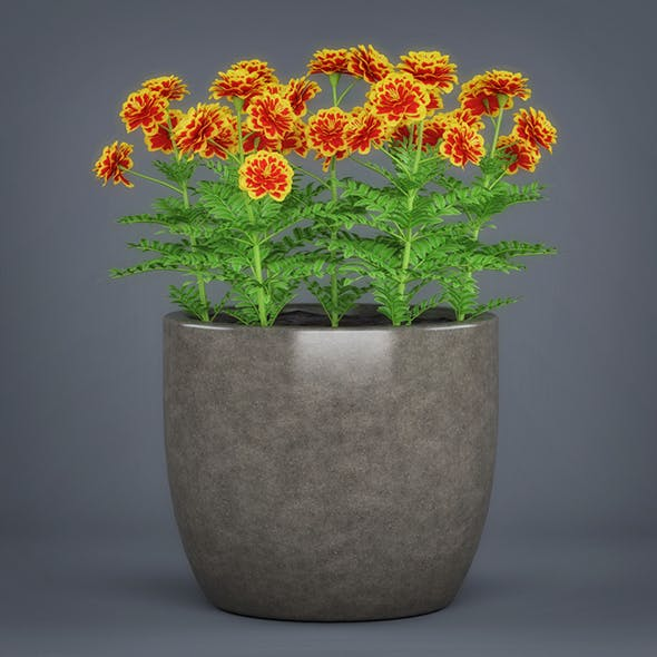 Potted Flower Plant