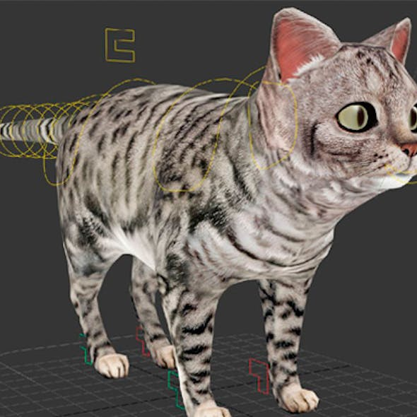 Cat - Silver Tabby Young by Navi3D