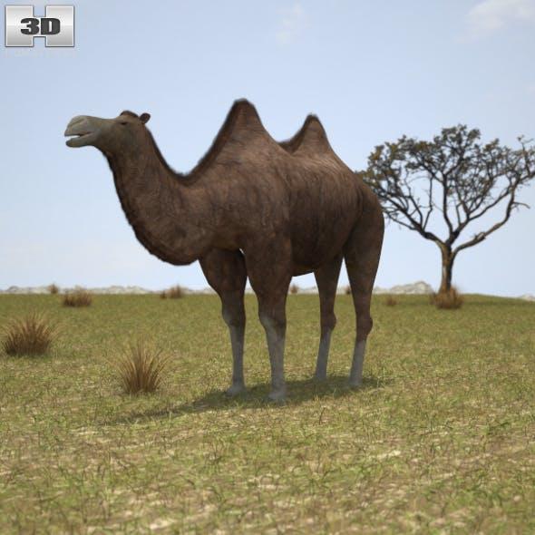 Camel Bactrian - 3DOcean Item for Sale