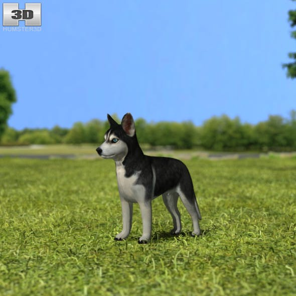 Siberian Husky Puppy - 3DOcean Item for Sale