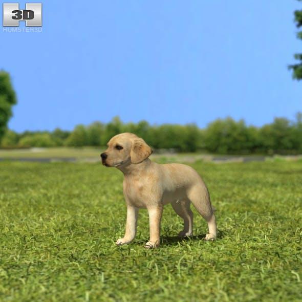 Labrador Retriever Puppy - 3DOcean Item for Sale