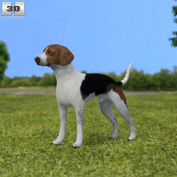 English Foxhound - 3DOcean Item for Sale