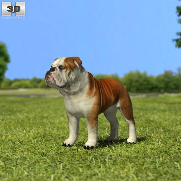 Bulldog - 3DOcean Item for Sale
