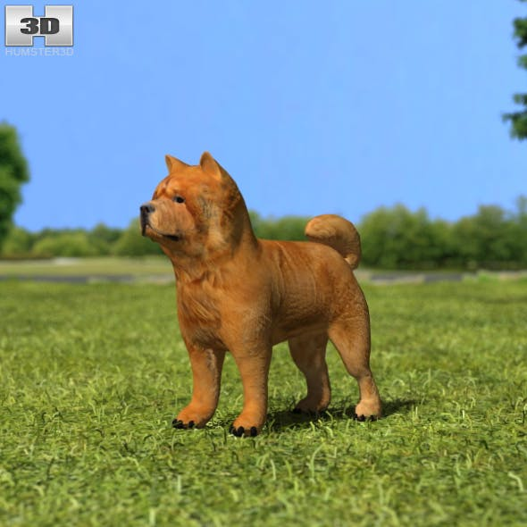 Chow Chow - 3DOcean Item for Sale