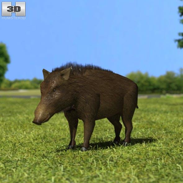 Wild Boar - 3DOcean Item for Sale