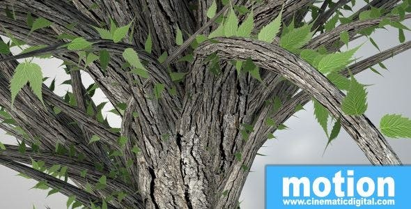 Exotic tree V2 - 3DOcean Item for Sale