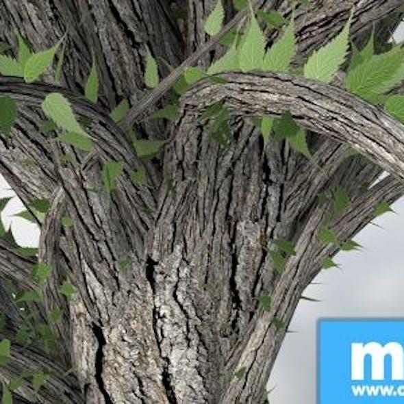 Exotic tree V2