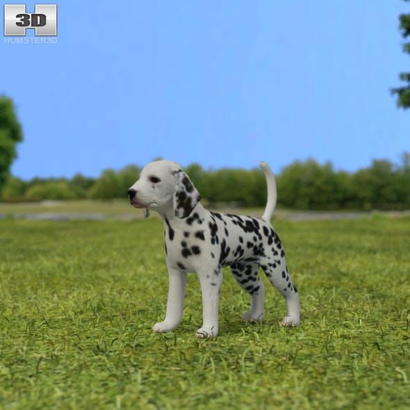 Dalmatian Puppy - 3DOcean Item for Sale