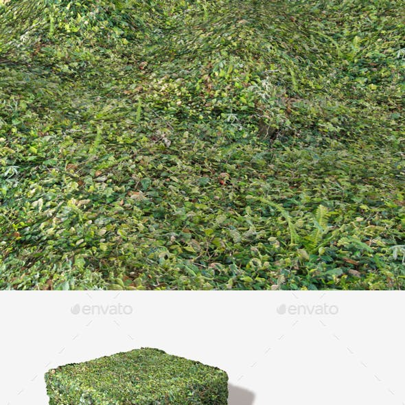 Dense Forest Floor Seamless Texture