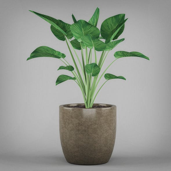 Potted Tropical Plant - 3DOcean Item for Sale