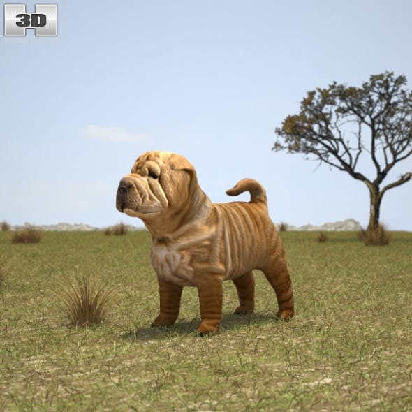 Shar Pei Puppy - 3DOcean Item for Sale