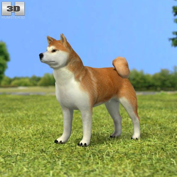 Akita Inu - 3DOcean Item for Sale