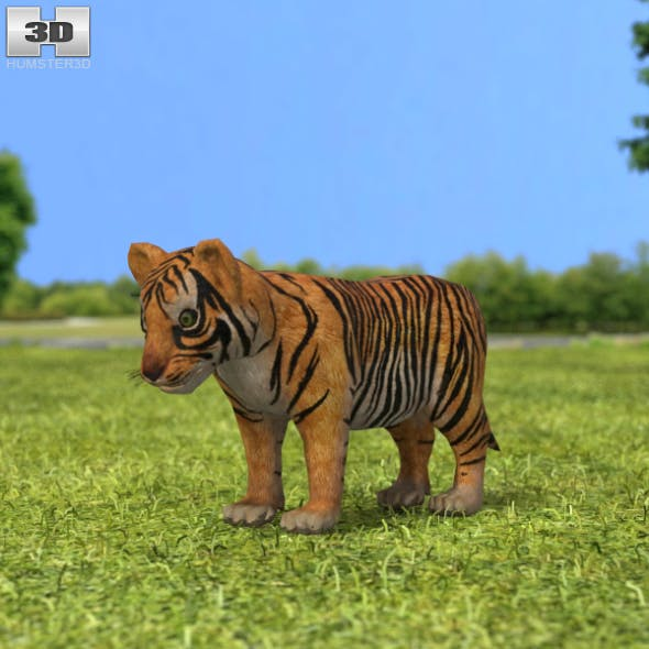 Tiger Cub - 3DOcean Item for Sale