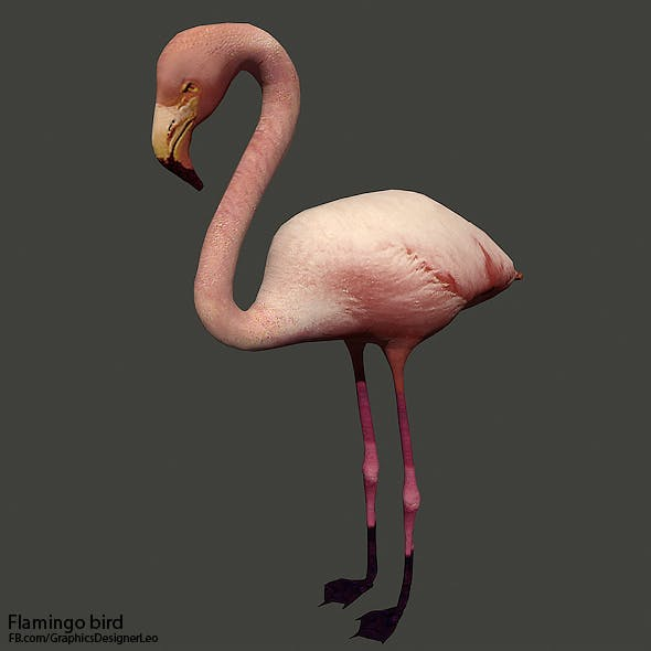 Flamingo bird ( Full Textures )