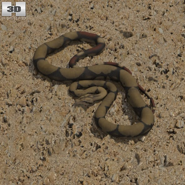 Boa Constrictor - 3DOcean Item for Sale