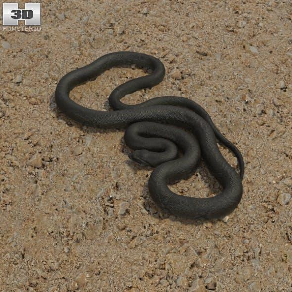 Green Anaconda - 3DOcean Item for Sale