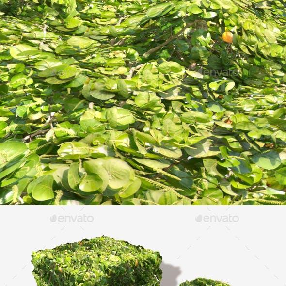 Jungle Shrubbery Seamless Texture