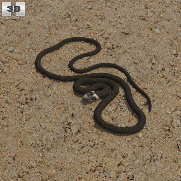 Grass Snake - 3DOcean Item for Sale