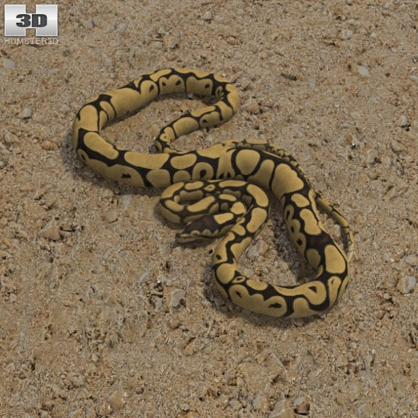 Common Python - 3DOcean Item for Sale
