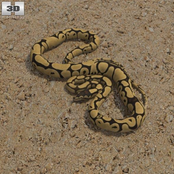 Common Python